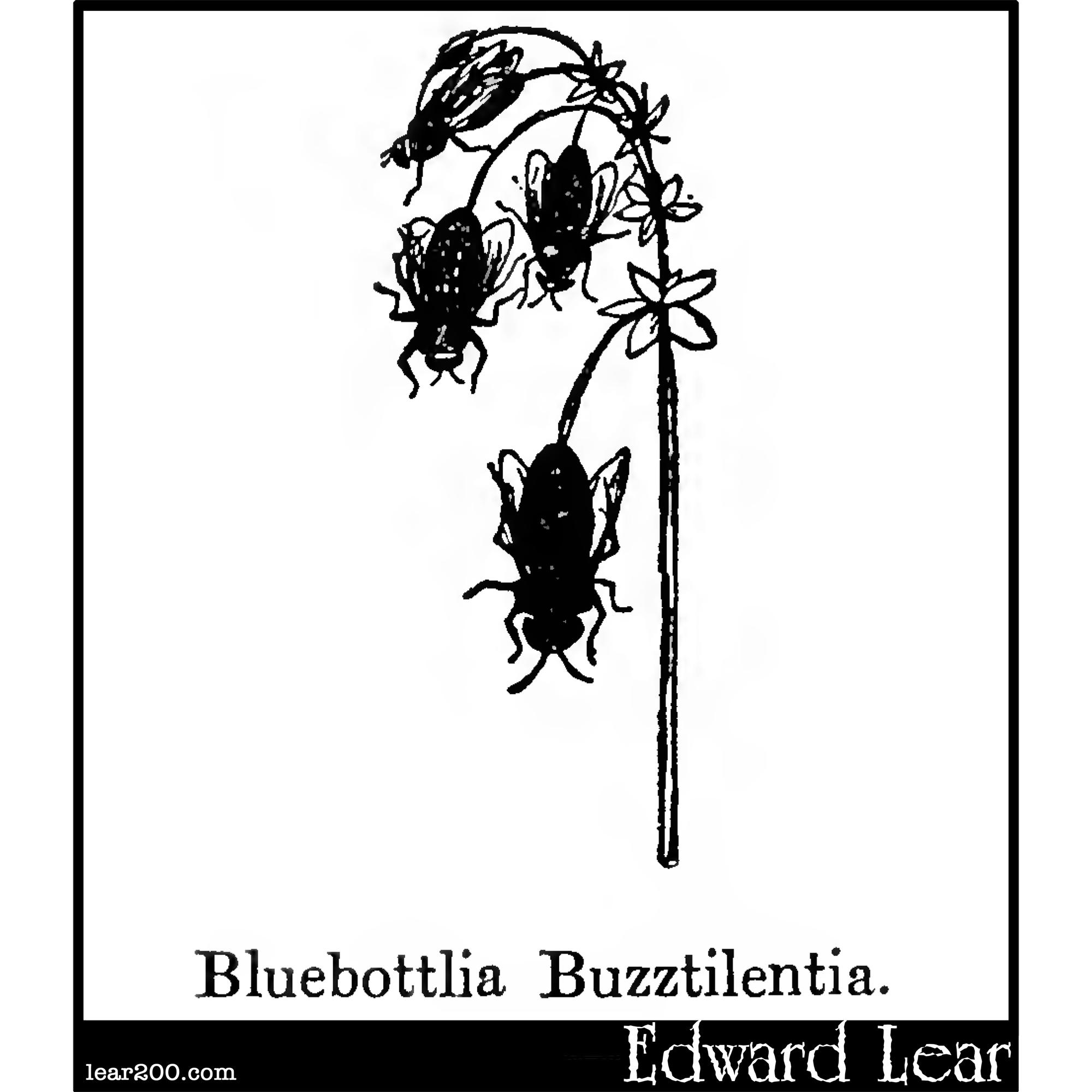 Bluebottlia Buzztilentia