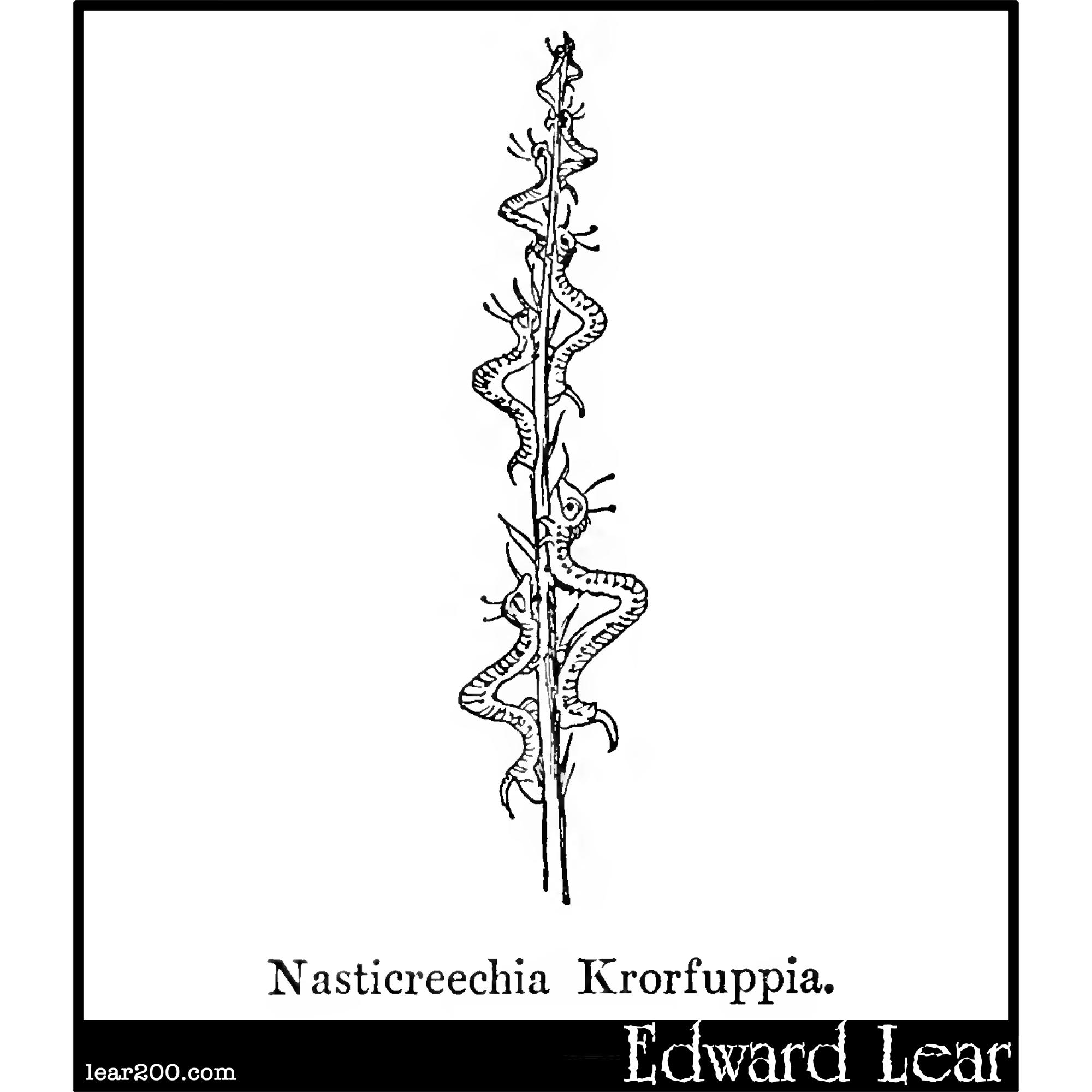 Nasticreechia Krorluppia