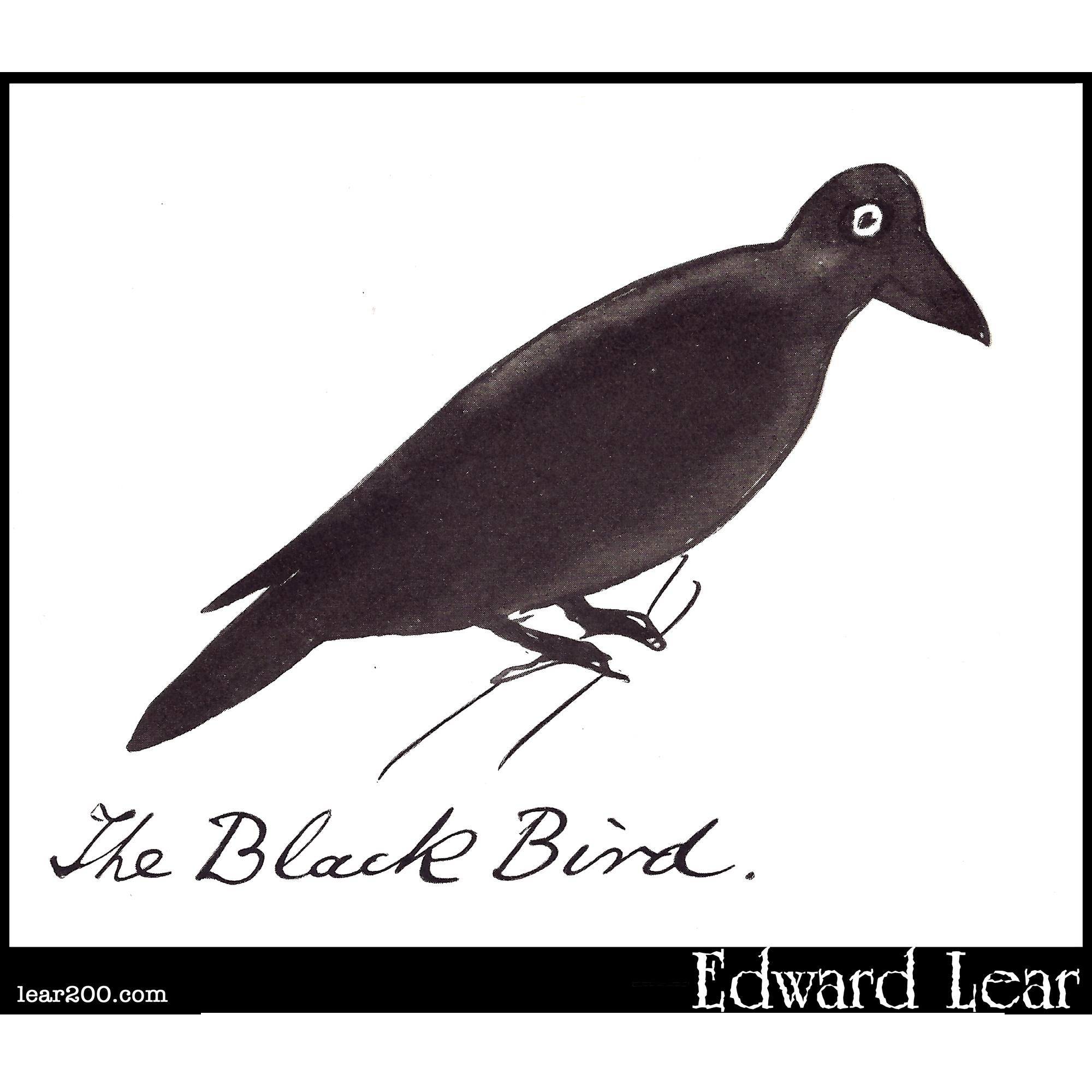 The Black Bird