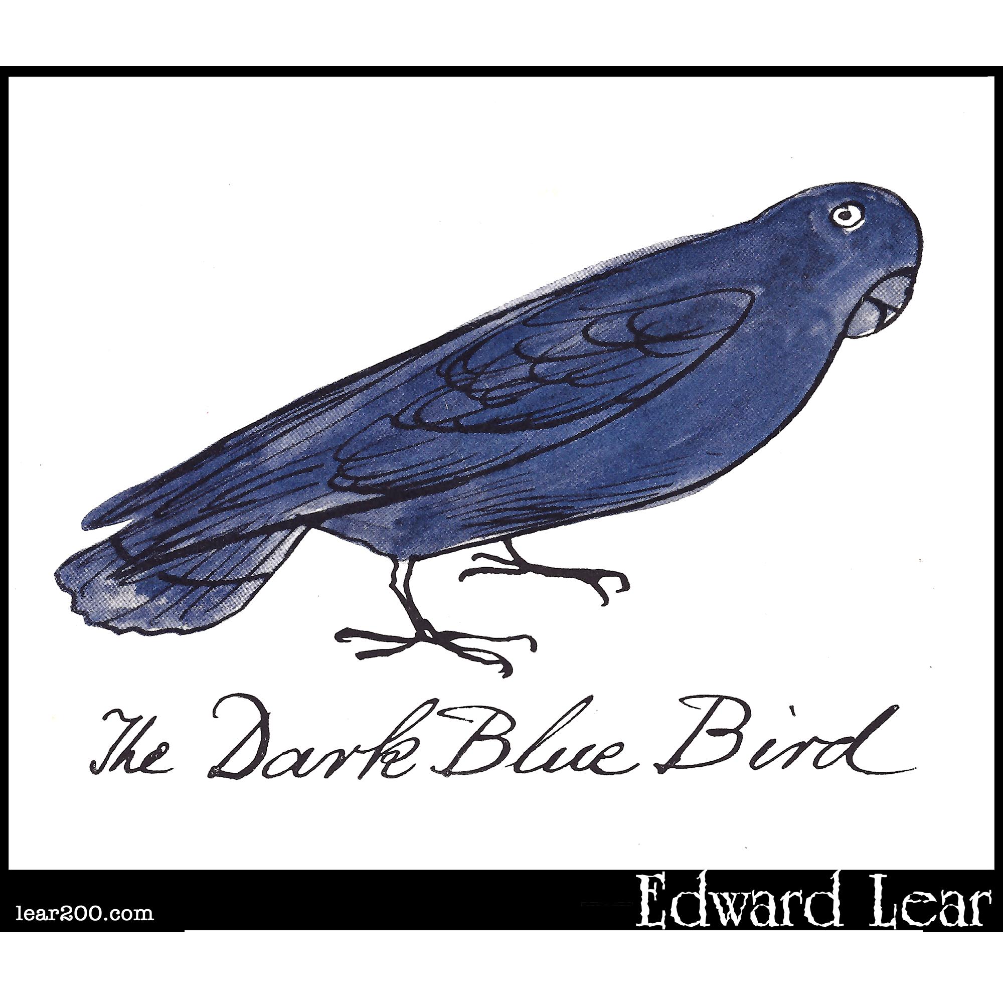 The Dark Blue Bird