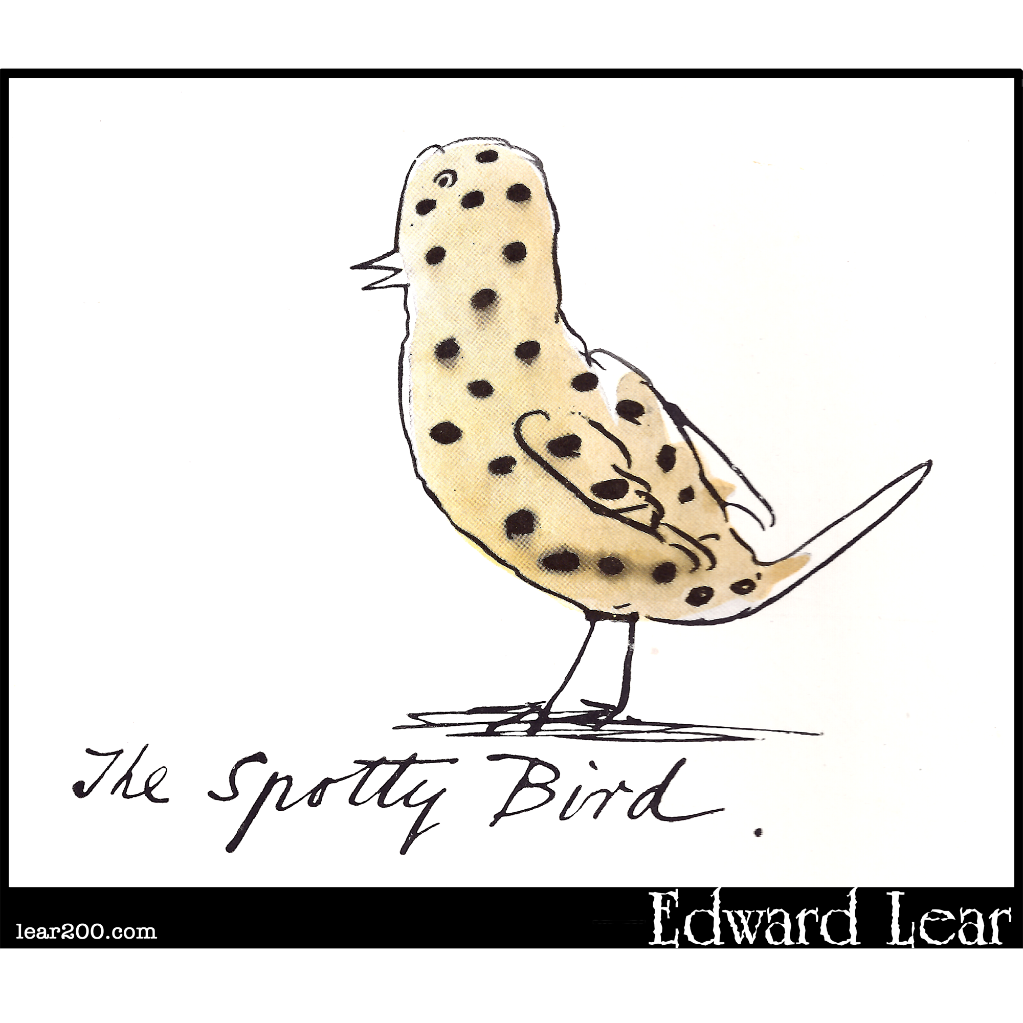 The Spotty Bird