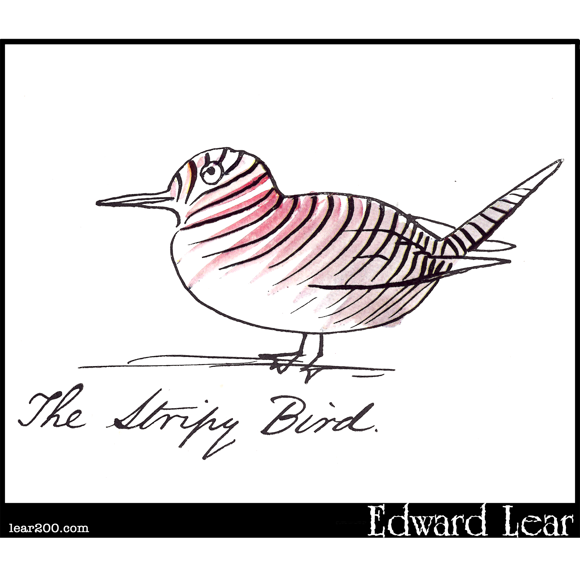 The Stripy Bird
