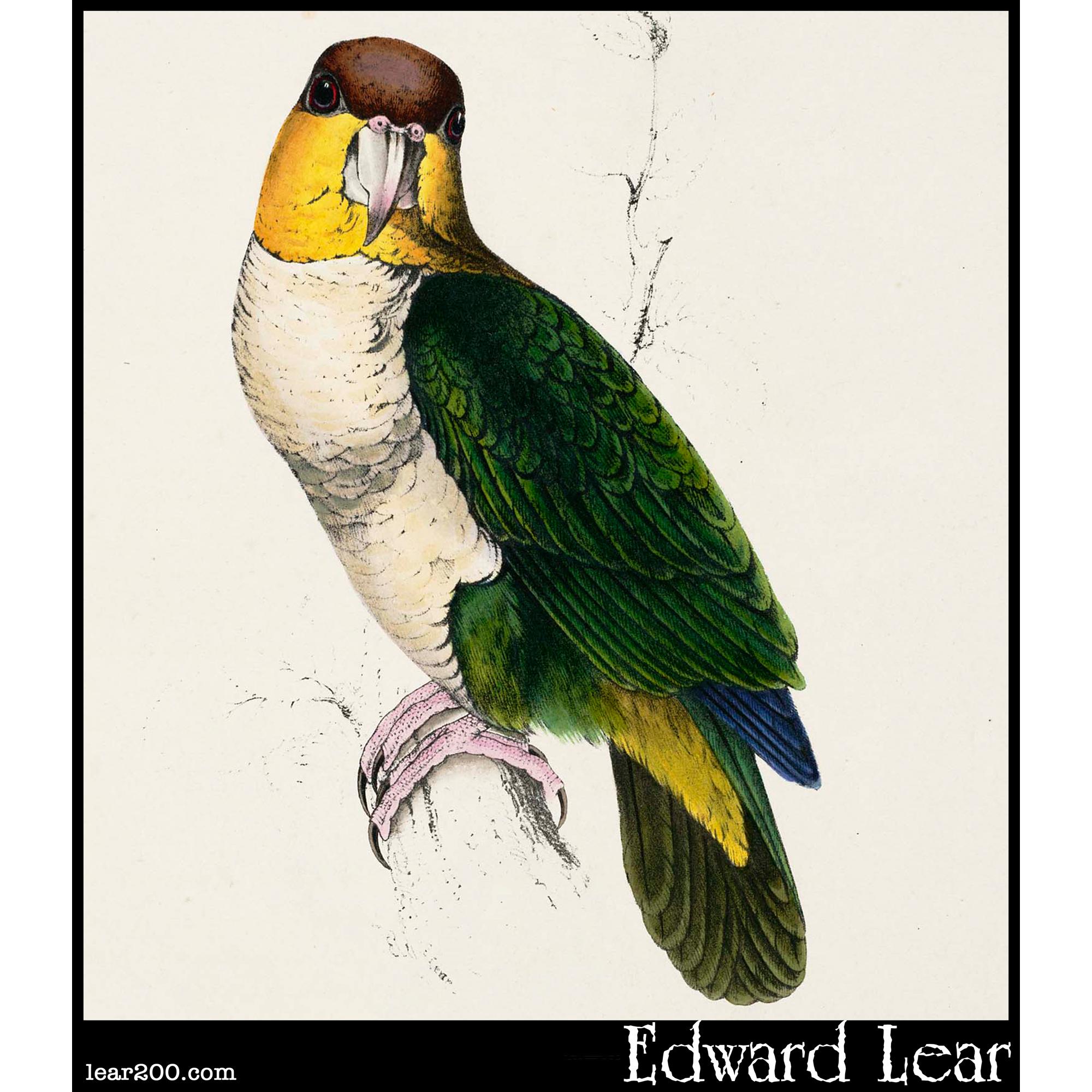 Psittacus Badiceps, the Bay-headed Parrot