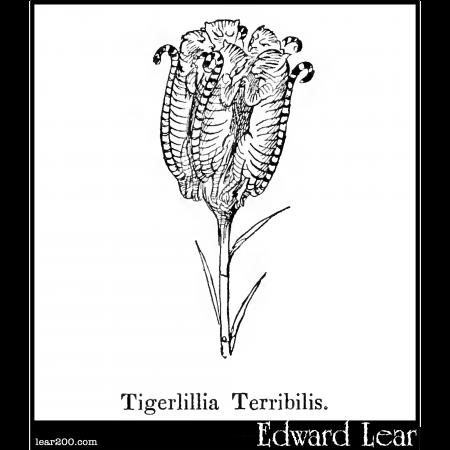 Tigerlillia Terribilis