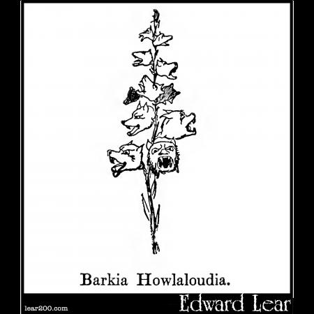 Barkia Howlaloudia