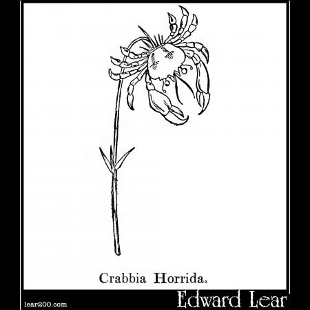 Crabbia Horrida