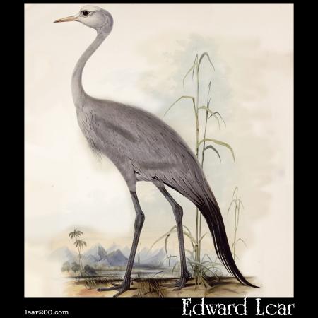 Stanley Crane, Scops Paradisea, Blue crane, Paradise crane