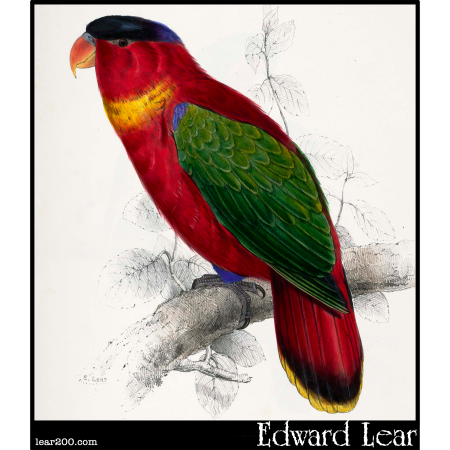 Lorius domicella, Black-Capped Lory