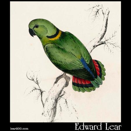 Psittacula swinderniana, Swindern's Parakeet