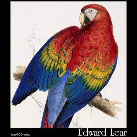 Red and Yellow Macaw (Macrocercus aracanga )