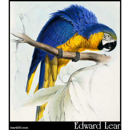 Blue and Yellow Macaw (Macrocercus ararauna )