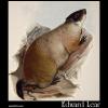 Quebec Marmot, Weenusk, Arctomys Empetra