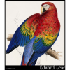 Red and Yellow Macaw (Macrocercus aracanga )
